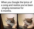 cat-google-lyrics-song-and-realize-been-singing-nonsense-6-months.jpeg