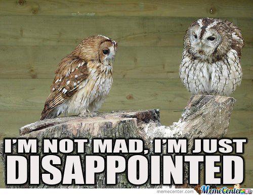 04088290eadfa04dfea0b9ce0acbf05f--funny-owls-funny-animals.jpg