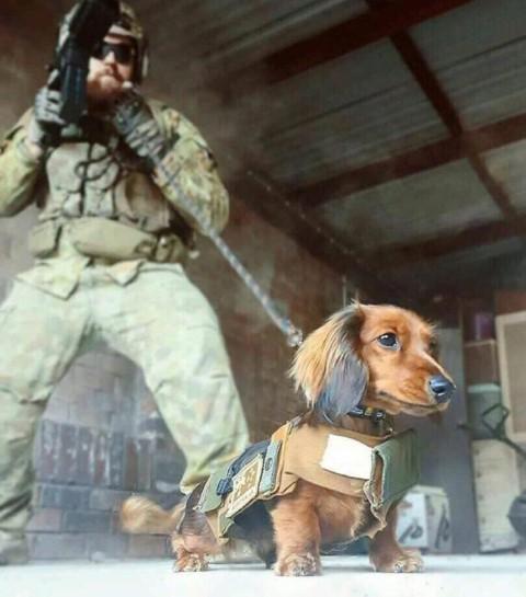 aggressive-war-dog-650x738 (Small).jpg