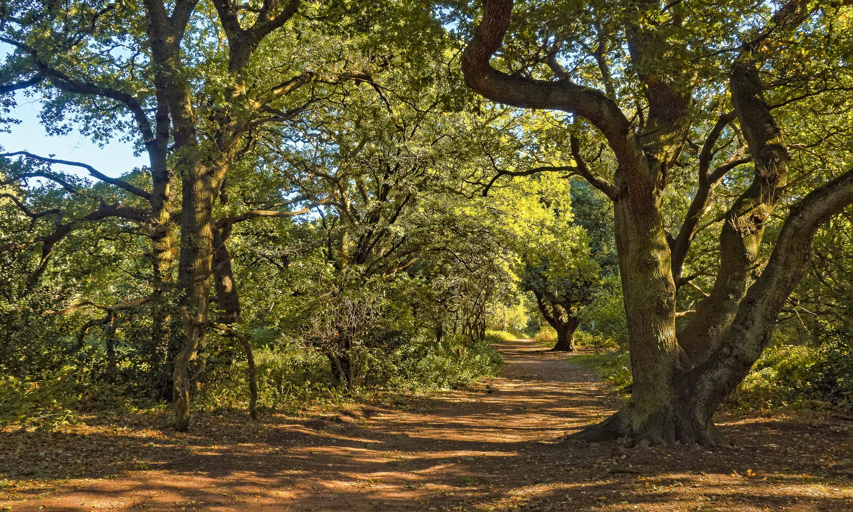 UK_SherwoodForest_UK_Header.jpg